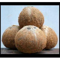 Matured Coconut:
