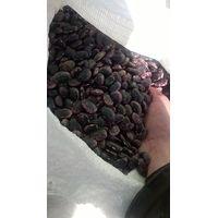 Smart Agro Invest LLC : Kidney Beans « Big Color Bandolya » from Ukraine