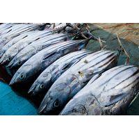 Tuna Fish thumbnail image