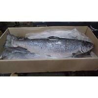 Frozen Fresh Salmon Fish thumbnail image