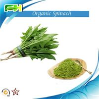 Spinach Extract. Organic Spinach Powder thumbnail image