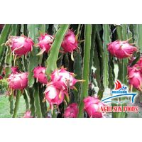 VIETNAMESE DRAGON FRUIT