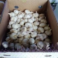 New Crop Fresh Normal White Garlic in Various sizes