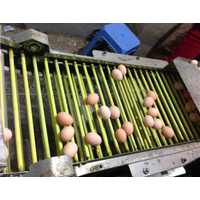 Egg collecting equipment