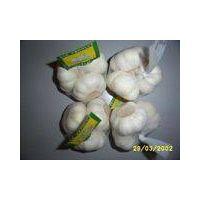 POLOMA fresh garlic thumbnail image