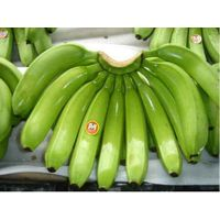 Fresh-Cavendish-Bananas,Fresh Pineapple,From Philippines For Sale