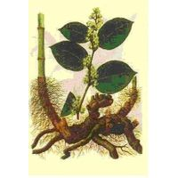 Giant knotweed extract & Resveratrol thumbnail image