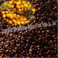 Seabuckthorn  seed