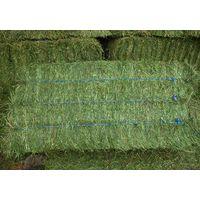 Quality Alfalfa Hay / Alfalfa Hay Pellets
