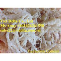 Echeuma Cottonii/Seaweed Best Quality