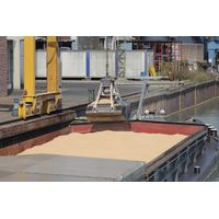 Milling Wheat FOB Russia