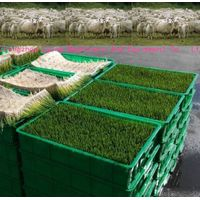 Sheep Cattle Hydroponic Barley Sprouting Machine for Sale