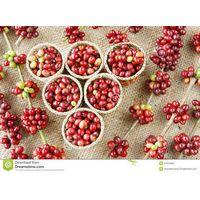Coffee Bean - Robusta - Instant Coffee thumbnail image