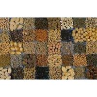 Sell Offer Flax Seeds, Cumin Seeds, Cotton Seeds 50% Discount thumbnail image