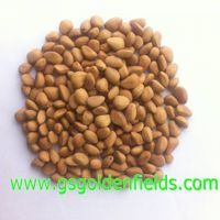Raw Wild Pine Nuts with Shells On Sale Factory Price!