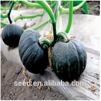 Green Bo Chinese Round Shape Orange Flesh Pumpkin Seeds