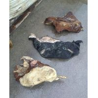 Perfect Dry And Wet Salted Cow Head Skins thumbnail image