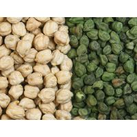 Chick Pea/ Bengal Gram/ Channa thumbnail image