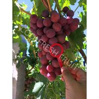 Red Global Grape
