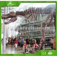 KAWAH Full Size Fiberglass Dinosaur Skeleton Replica & Realistic Full Dinosaur Skeleton thumbnail image