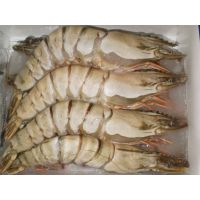 Black Tiger Shrimp HOSO/HLSO/PUD/PD/PTO/CPD