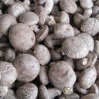 Fresh Shiitake Mushroom thumbnail image