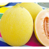 Yellow Chinese hami melon seeds for sowing