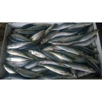 Frozen Round scad mackerel