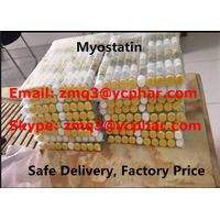 High Quality Myostatin GDF-8 for Adult with GMP