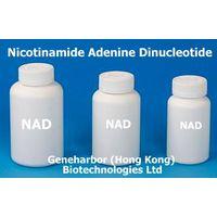 NAD (Nicotinamide Adenine Dinucleotide)