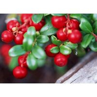 High quality Cranberry Extract for customer