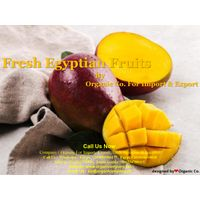 High Quality Egyptian Sweet Mango, Green Color and Yellow 2021