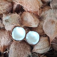 Dried mature semi husked coconuts thumbnail image
