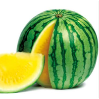 Golden Orchid seedless hybrid watermelon seeds for planting