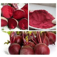 Natural beet root extract Nitrate 2.5% (newoly)