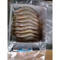 Available all kinds of shrimp , HOSO. ICF - HLSO BLock