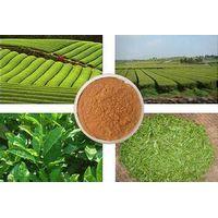 Caffeine Green Tea Extract thumbnail image