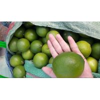 HIGH QUALITY SEEDLESS LIME- WHATSAPP/WECHAT: +1204590950