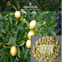 Lemon Fruits Tree seeds ( Citrus ) thumbnail image