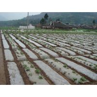 Plastic mulching film agriculture film thumbnail image
