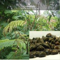 Shikakai Medicinal Seeds ( Acacia Concinna )