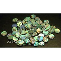 Paua Abalone Dots