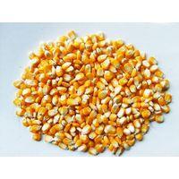Yellow Corn (Animal Feed) Grade 2#