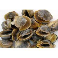frozen moon snail meat thumbnail image