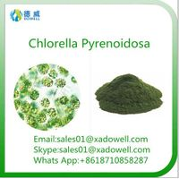 High quality and Natural Beauty Powder Chlorella Pyrenoidosa