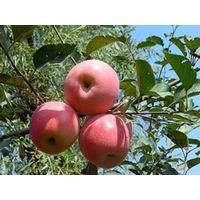fresh apple thumbnail image