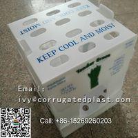 Asparagus Boxes,corrugated plastic boxes manufacturers,collapsible corrugated plastic boxes thumbnail image