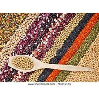 LENTILS AND BEANS (PULSES)