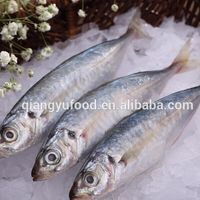 whoelsale frozen seafood blue scad mackerel price
