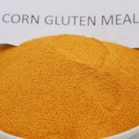 corn gluten meal